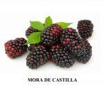 Mora-castilla